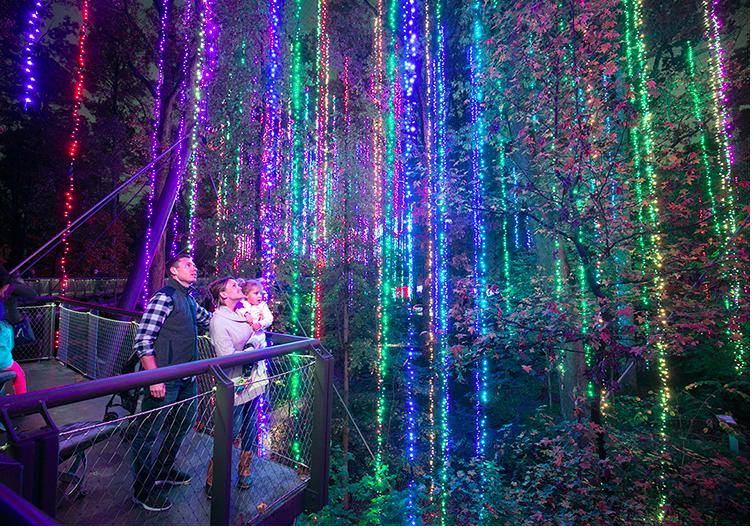 亚特兰大植物园灯展